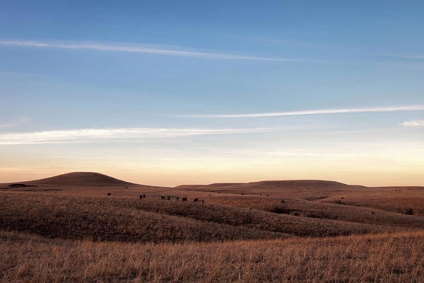 Photograph - Winter's Prairie by Scott Bean