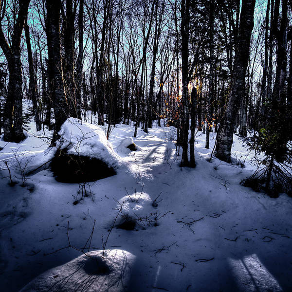 Photograph - Winters Shadows by David Patterson