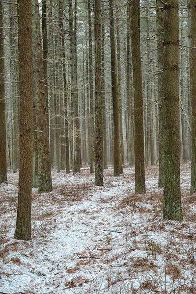 Photograph - Winter's Trail by Denise Bush