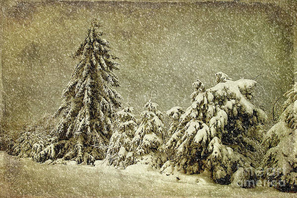 Photograph - Winter's Wrath by Lois Bryan