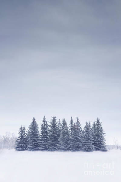 Wall Art - Photograph - Winterscape by Evelina Kremsdorf