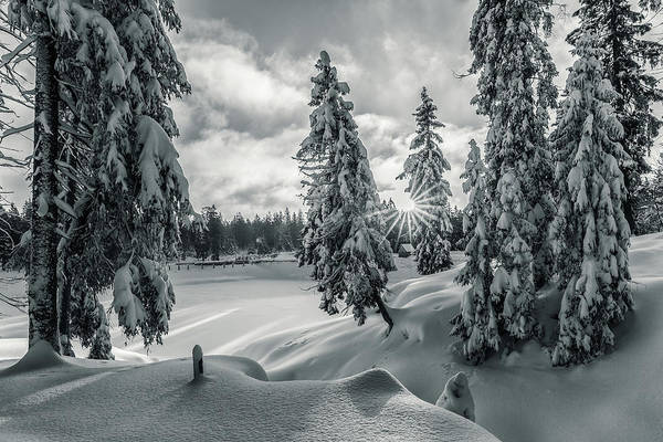 Photograph - Winter Wonderland Harz In Monochrome by Andreas Levi