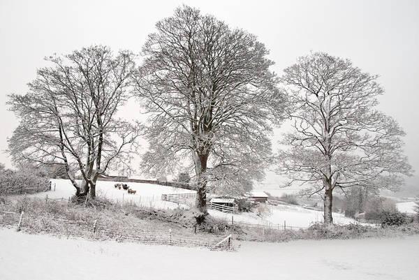 Photograph - Wintery Scene by Pete Hemington