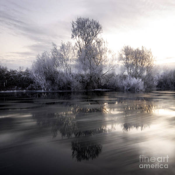 Wall Art - Photograph - Wintery Tales by Angel Ciesniarska