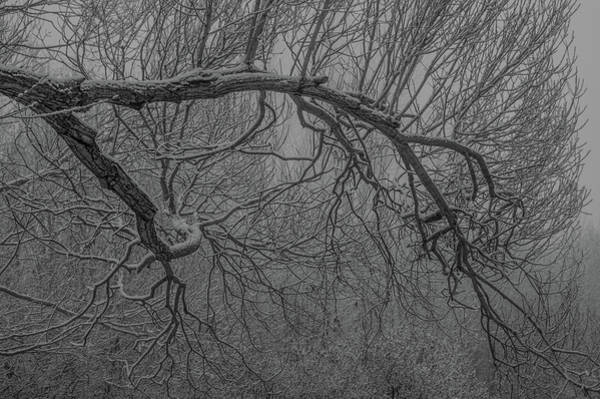 Photograph - Wintery Tree by Jedediah Hohf