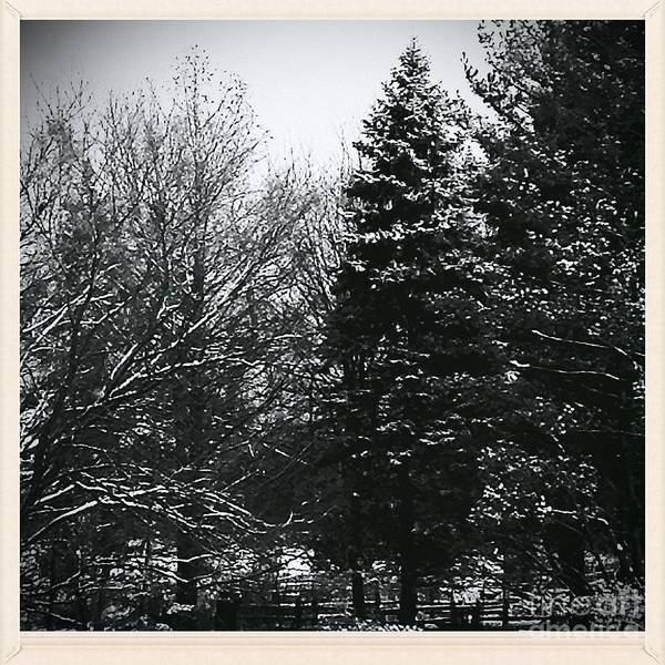 Photograph - Wintery Woods  by Frank J Casella