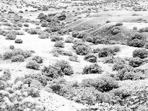 Photograph - Wintry Day In The High Mountain Desert by Mary Lee Dereske