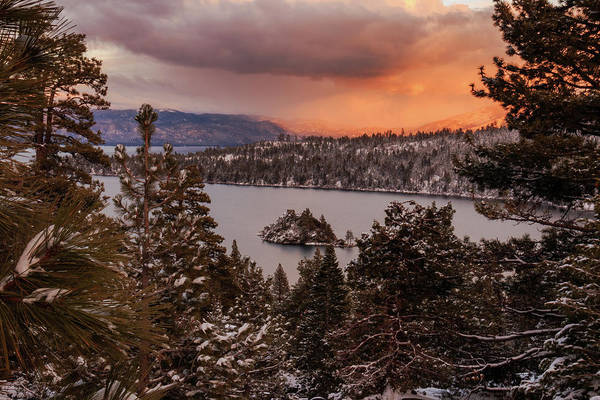 Herron Photograph - Wintry Emerald Bay Trees At Sunset by Mike Herron