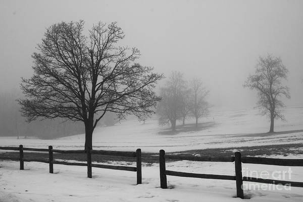 Photograph - Wintry Morning by Crystal Nederman