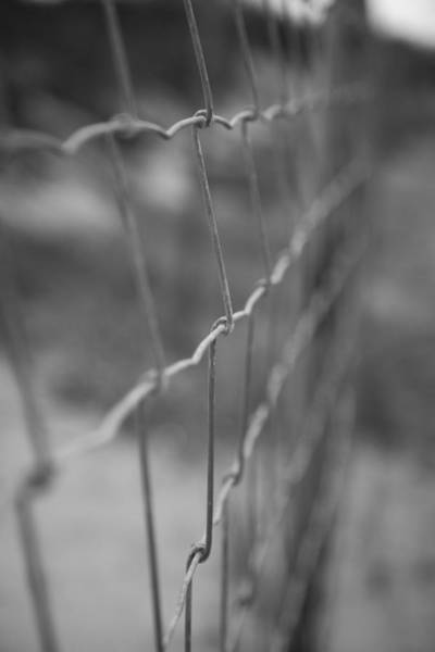 Chain Link Photograph - Wire Fence by Erin Cadigan