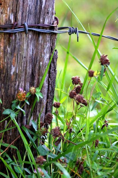 Photograph - Wire Fence Post  by Carol Montoya