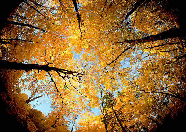Fish Eye Lens Photograph - Wisconsin Canopy by Todd Klassy