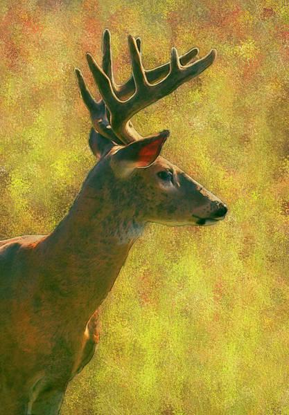 Wi Wall Art - Painting - Wisconsin White Tail Buck by Jack Zulli