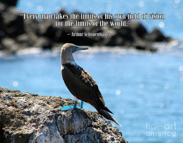 North Seymour Island Photograph - Wise Bird Philosophy by Catherine Sherman