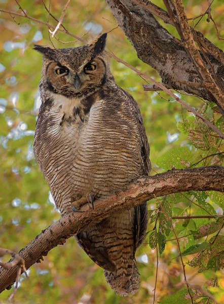 Photograph - Wise Old Owl by Loree Johnson