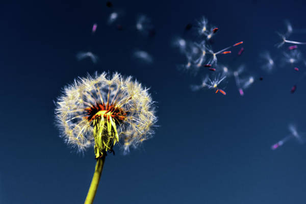 Photograph - Wish Come True by Scott Campbell