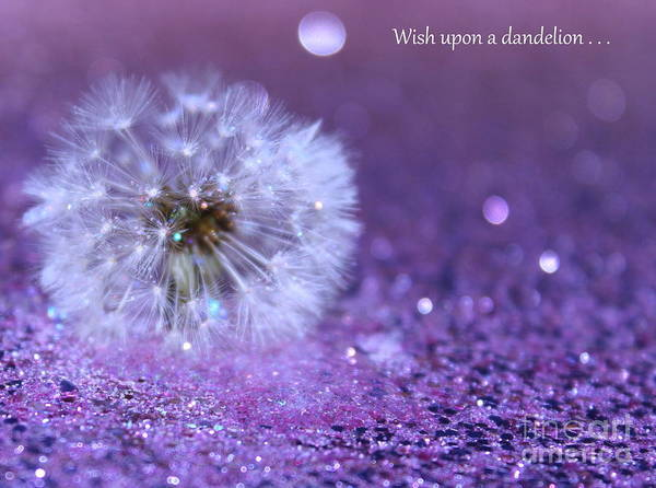 Inspirational Quote Photograph - Wish Upon by Krissy Katsimbras