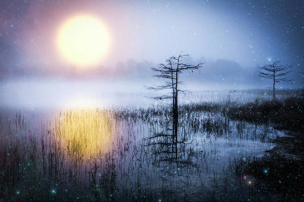 Okeeheelee Park Photograph - Wishing On A Star by Debra and Dave Vanderlaan