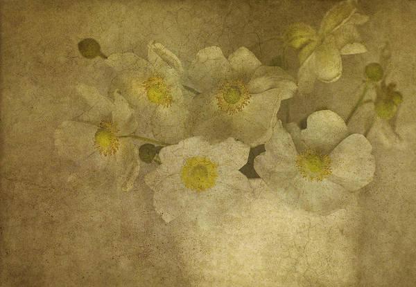 Anemone Photograph - Wishing by Rebecca Cozart