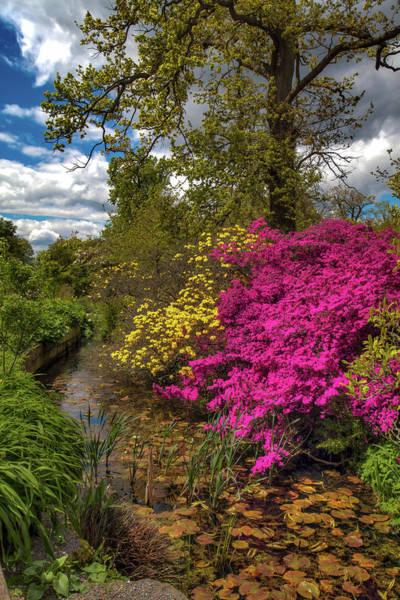 Photograph - Wisley Garden by Ross Henton