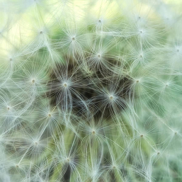 Photograph - Wispy And Delicate by Denise Beverly