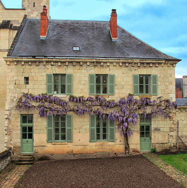 Fontevraud Photograph - Wisteria At Fontevraud Abbey by Dave Mills
