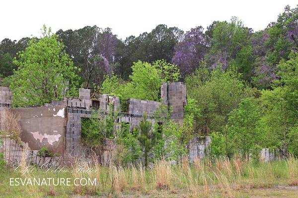 Photograph - Wisteria Castle by Captain Debbie Ritter
