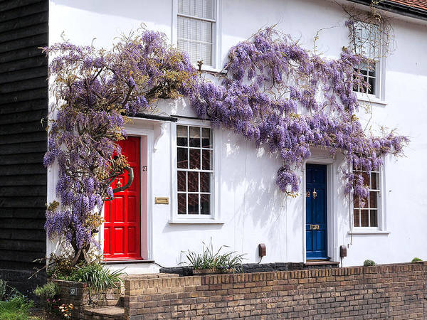 Photograph - Wisteria Cottages by Gill Billington
