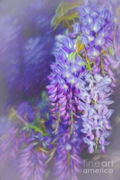 Wisteria Wall Art - Photograph - Wisteria Elegance By Kaye Menner by Kaye Menner