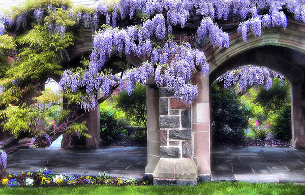 Photograph - Wisteria Lane by Jessica Jenney