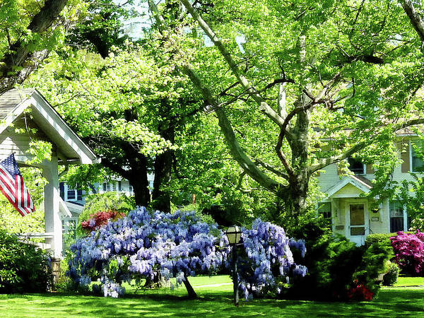 Photograph - Wisteria On Lawn by Susan Savad