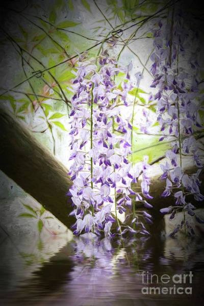 Photograph - Wisteria Reflections by Elaine Teague