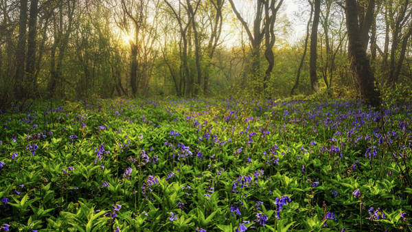 Photograph - Wistow Wood Bluebells 1 by James Billings