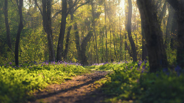 Photograph - Wistow Wood Bluebells 4 by James Billings