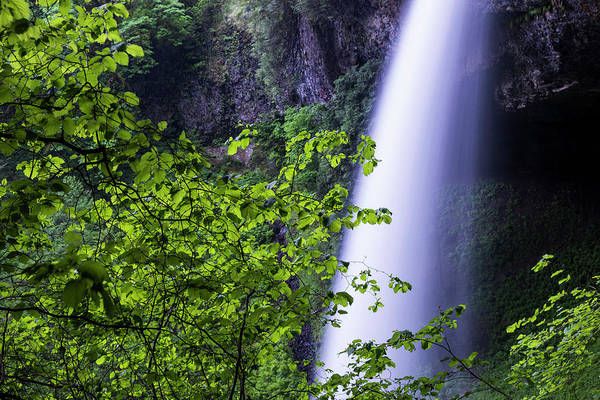 Photograph - Witch Hazel And Falls by Robert Potts