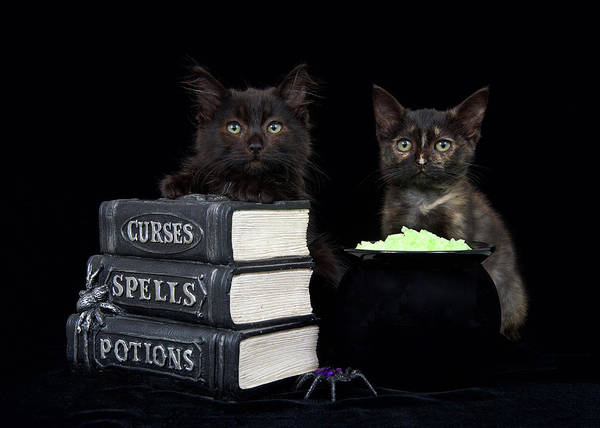 Spider Rock Photograph - Witch Kittens Halloween Fun by Sheila Fitzgerald
