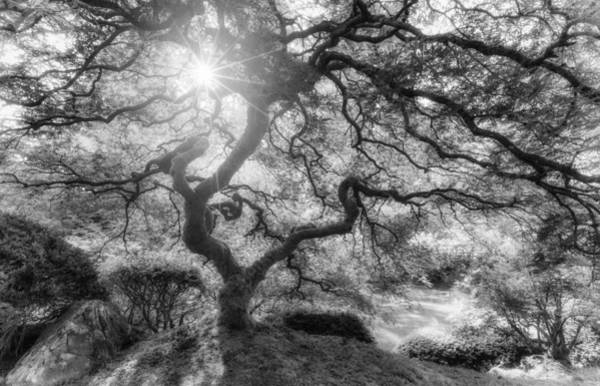 Photograph - Witches Light by Darren  White
