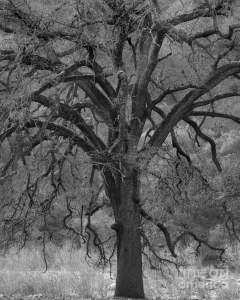Photograph - Witching Tree Photograph by Kristen Fox