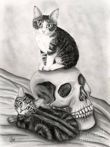 Drawing - Witch's Kittens by Carrie Hawks