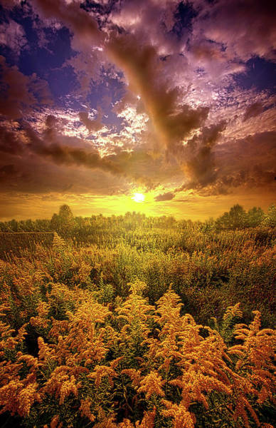 Wall Art - Photograph - With All Your Heart And Soul by Phil Koch