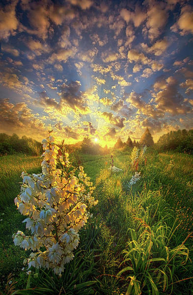 Natural Light Photograph - With An Angel By My Side by Phil Koch