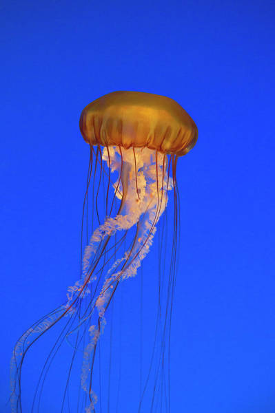 Monterey Bay Aquarium Photograph - With Ease And Grace by Brian Knott Photography