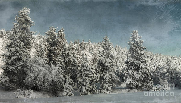 Photograph - With Love - Winter  by Beve Brown-Clark Photography