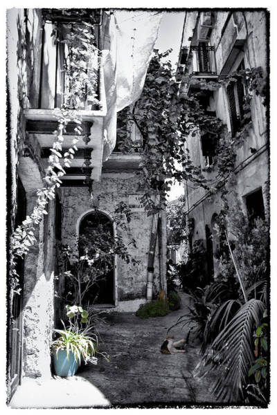 Houses Wall Art - Photograph - With One Cat In The Yard by Madeline Ellis