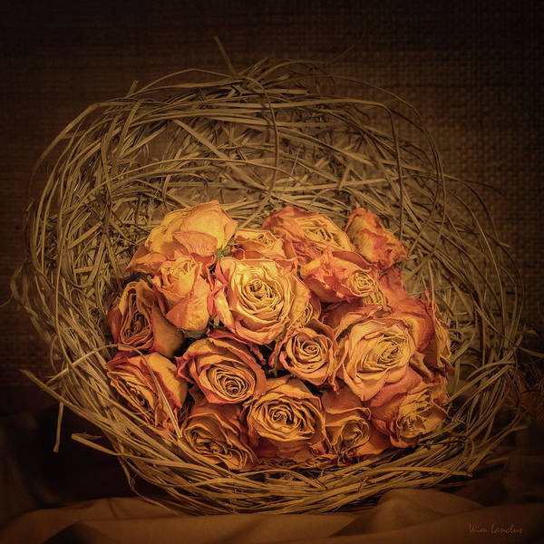 Wall Art - Photograph - Withered Roses by Wim Lanclus
