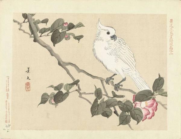 Painting - Witte Kaketoe Op Cameliatak, Matsumura Keibun, Aoki Kosaburo  Aoki Kosaburo  1892 by Artistic Panda