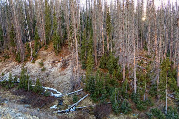 Photograph - Wolf Creek Pass Forest Landscape by James BO Insogna