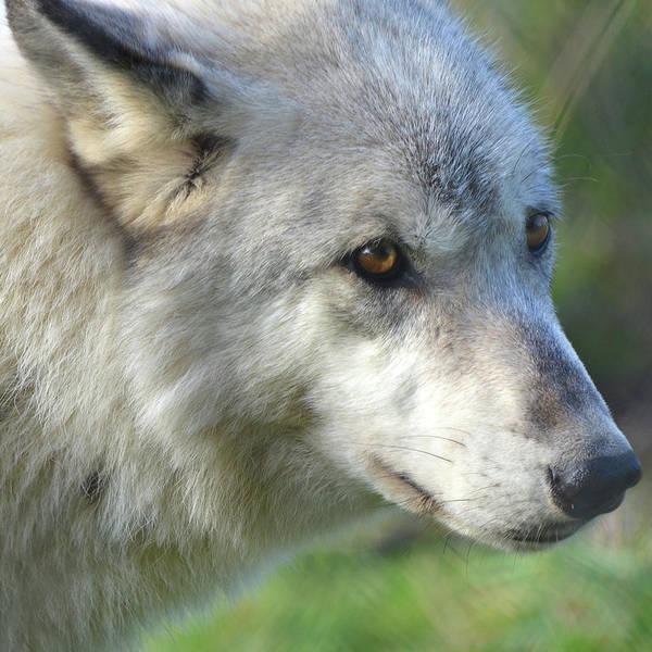 Photograph - Wolf Hollow 9330b by Matt Cegelis