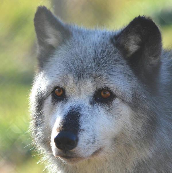 Photograph - Wolf Hollow 9390b by Matt Cegelis