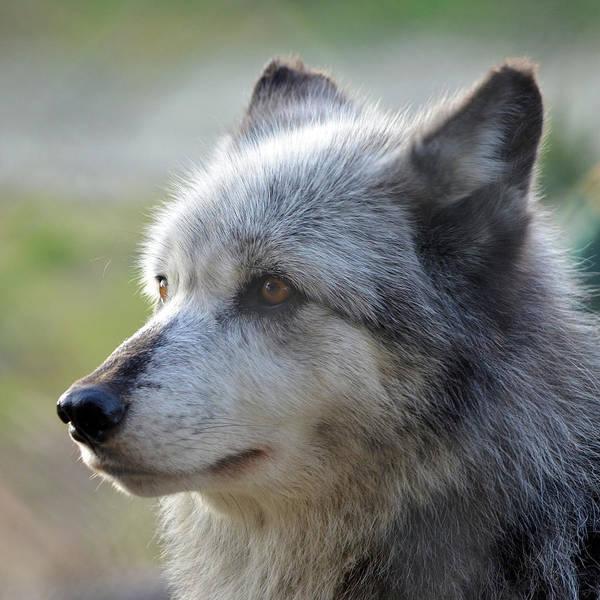 Photograph - Wolf Hollow 9582b by Matt Cegelis